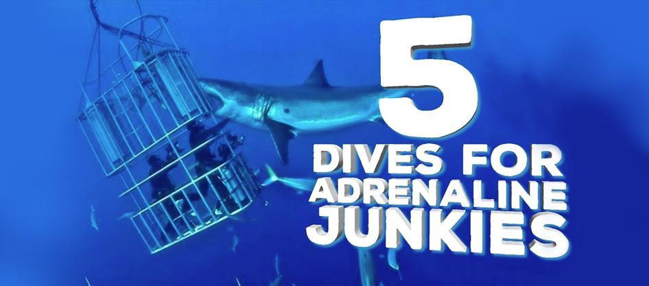 5 Dives For Adrenaline Junkies