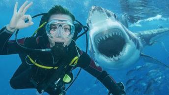 How To Survive Marine Creature Attacks