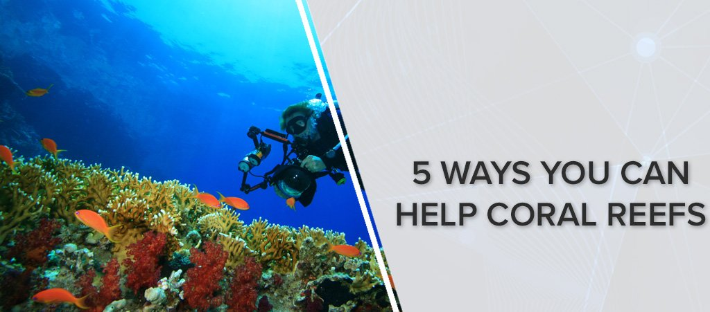 5 Ways You Can Help Reefs